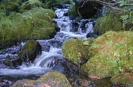 image of a creek