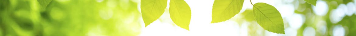banner image of green leaves